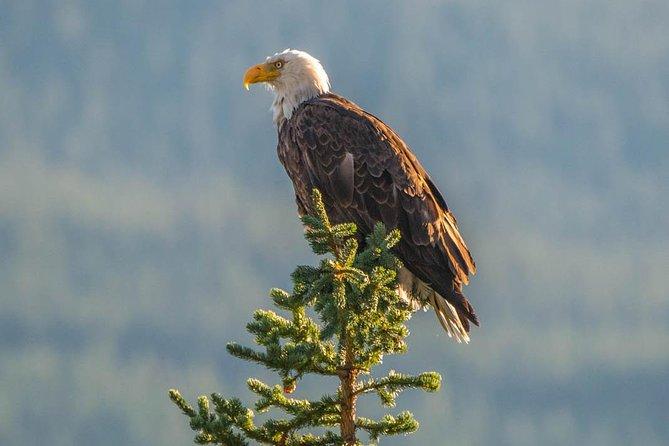 Excursión de 5,5 horas de la fauna, flora y cascadas de Jasper, con crucero por el lago Maligne de Jasper., Jasper, CANADA