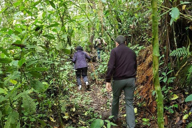 Filandia, Natural Reserve and Artesanal Daytour, ,