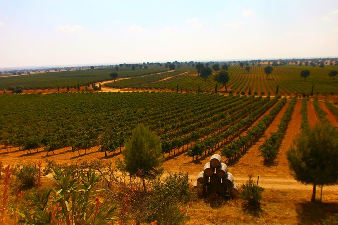 Small-Group Wine Tasting Day Trip from Madrid, Madrid, ESPAÑA