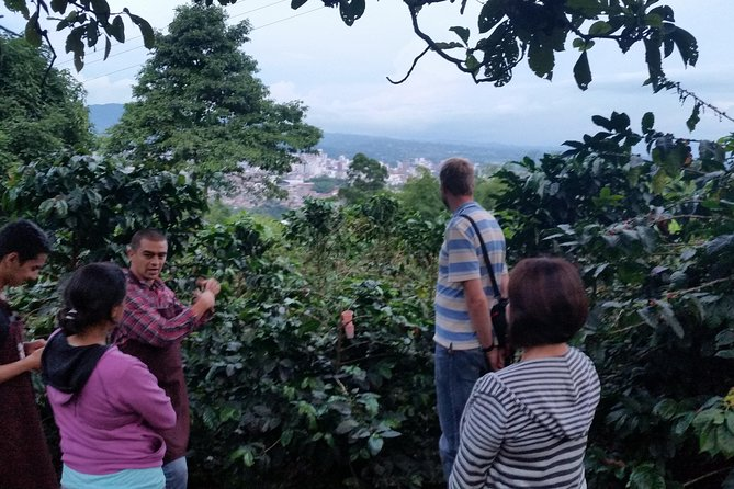 Serranía del Nudo, Nature and Coffee Tour, Pereira, COLOMBIA