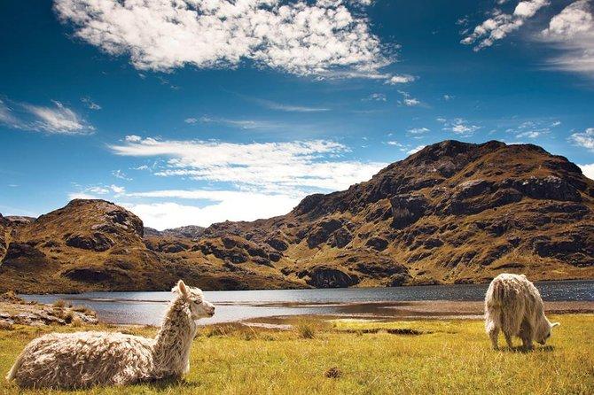 MÁS FOTOS, Private Cajas National Park Full Day Tour