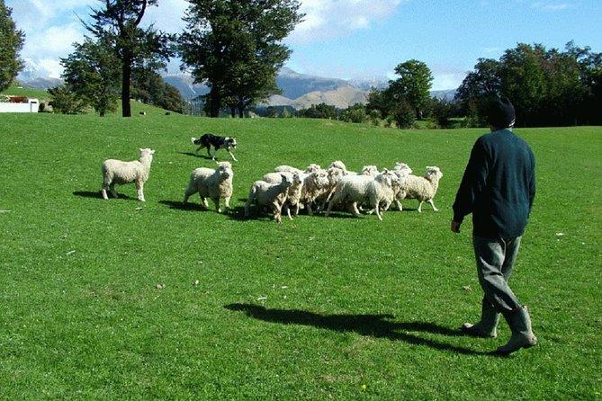 MÁS FOTOS, Akaroa Shore Excursion: Akaroa Harbour and Sheep Farm Local Tour