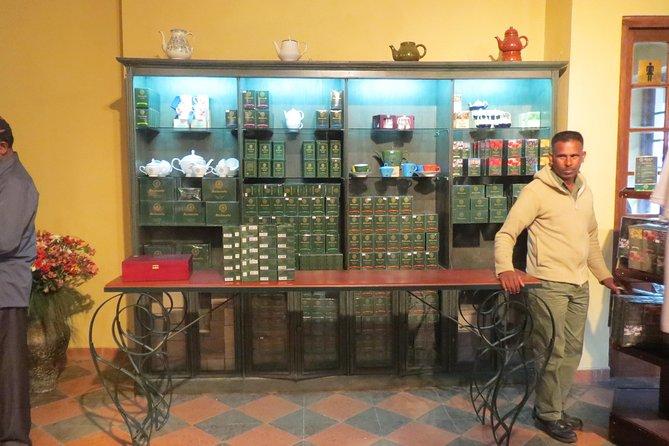 Nuwara Eliya Day Tour - Hill Country Tea Plantation Tour, Kandy, Sri Lanka