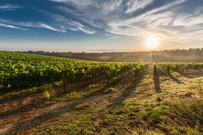Excursión privada: Región vinícolas de Valle de Uco, Mendoza, ARGENTINA