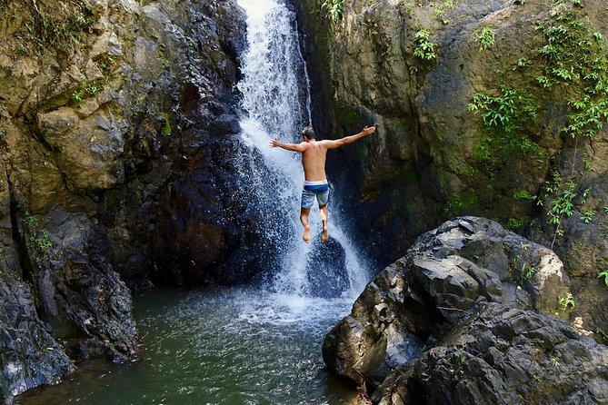 Rainforest El Yunque Tour, ,