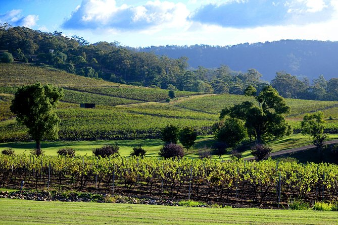 Ivanhoe Wines: Seated Wine Tasting Masterclass, Hunter Valley, AUSTRALIA