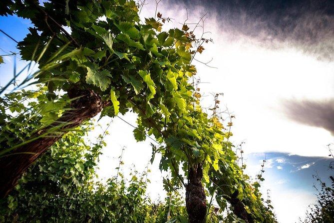 Wine day tour from Alba, Piedmont, Langhe-Roero y Monferrato, Itália