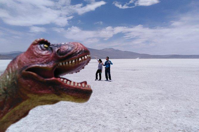 Salinas lake (national reserve Salinas y Aguada Blanca) Laguna de Salinas, Arequipa, PERU