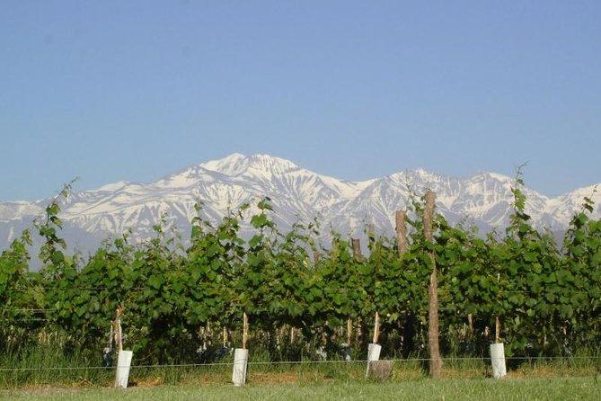 Vinos y Sabores de Maipú - Mendoza, Mendoza, ARGENTINA