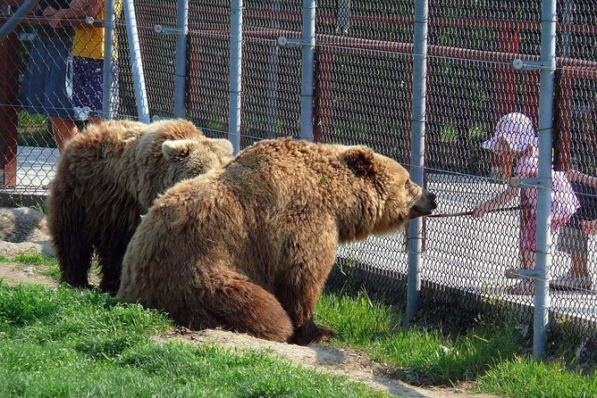 An organized and unique tour to the Bear Sanctuary of Veresegyhaz only for you - private trip including - transport from Budapest to Veresegyhaz with car, guide, tickets to enter the sanctuary and a bottle of water - the tour is also available with included lunch/dinner - price includes all.