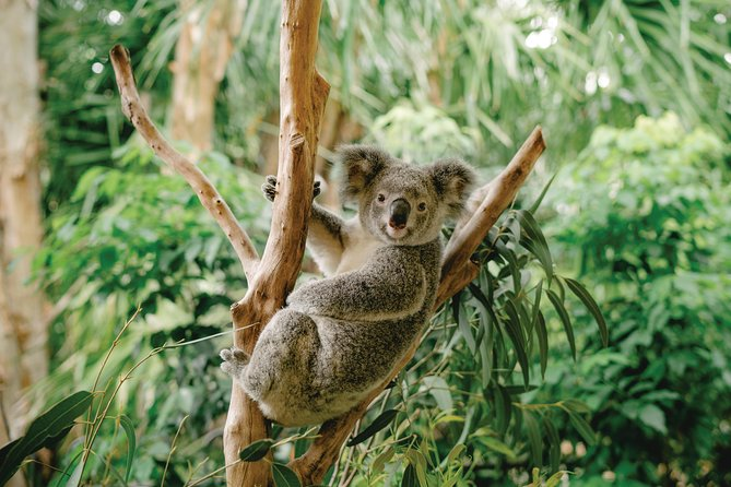 Full Day Brisbane Day Tour: Three Unique Experiences in One Day, Brisbane, AUSTRALIA
