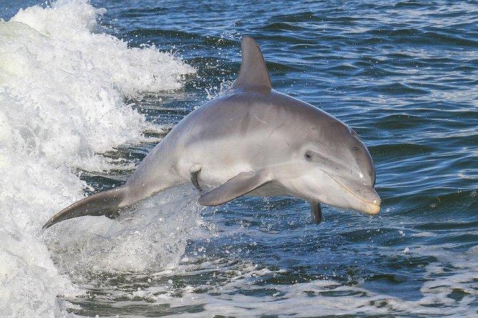 Noosa Oceanrider Scenic Dolphin Safari, Noosa y Sunshine Coast, AUSTRALIA