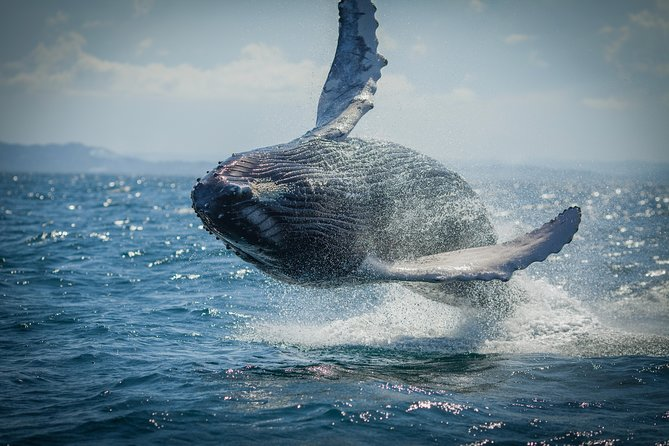Noosa Whale Watching Tour, Noosa y Sunshine Coast, AUSTRALIA