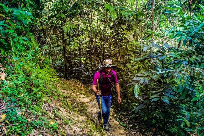 Trekking To Minca, Santa Marta, Colômbia