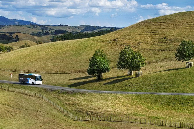 Hobbiton Movie Set and Waitomo Caves Full Day Tour departing Auckland, Auckland, New Zealand