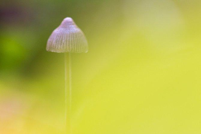Macro Photography Workshop (mushrooms) in Fagersta, Vasteras, Suécia