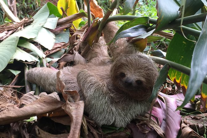 Rain forest, Wild life, Waterfall and Chocolate Private Tour, Playa Hermosa, COSTA RICA