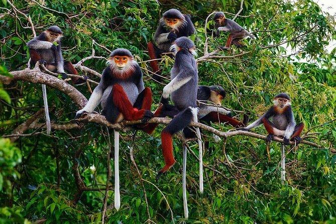 Recorrido en coche de Hue a Hoi An o de Hoi An a Hue por el paso de Hai Van, la montaña de los monos y las playas, Hue, VIETNAM
