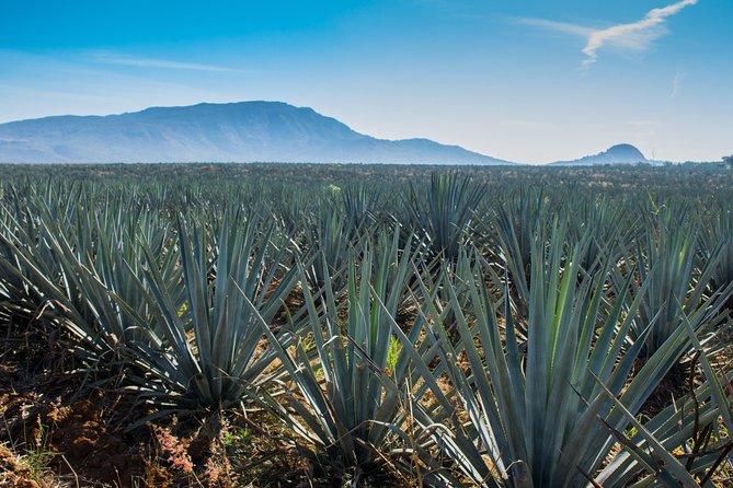 Experiencia de un día Tequila José Cuervo, Guadalajara, MEXICO