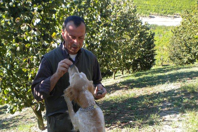 Truffle Hunt & Barolo Tasting, Langhe-Roero y Monferrato, Itália