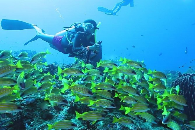 This is the perfect program if you want to experience scuba diving in a controlled, safe environment.<br><br>Swimming skills are NOT required for this program. This is not a training course, but meant to give you a taste of diving (and hopefully, get you hooked to the sport.) <br><br>Please note that there are many ways to conduct this program – as with everything else, we do not take the dive-factory approach with this program.<br><br>We conduct the program at a nice and leisurely pace; you are not hurried and if you need extra time to get comfy, you will get extra time to get comfy. <br><br>Our programs are conducted by fully trained dive professionals <br><br>We also take pictures of you underwater – please bring a memory card or pen drive; so that we can upload it for you (we no longer burn Cds / DVDs – too many issues with read errors later).