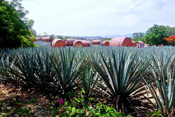 Best of Tequila and Guachimont Pyramids in One Day!!, Guadalajara, MÉXICO