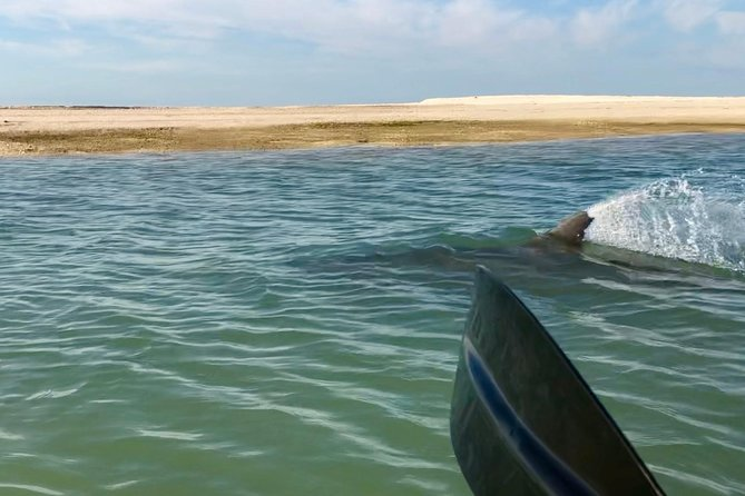 10,000 Islands Ultimate Shelling Kayak Adventure Tour Naples Kayak Adventures, Naples, FL, ESTADOS UNIDOS