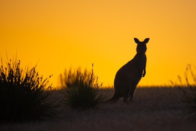 Kangaroo Island Luxury Small Group 'Flinders Chase Focus' Full Day Tour, Isla Kangaroo, AUSTRALIA