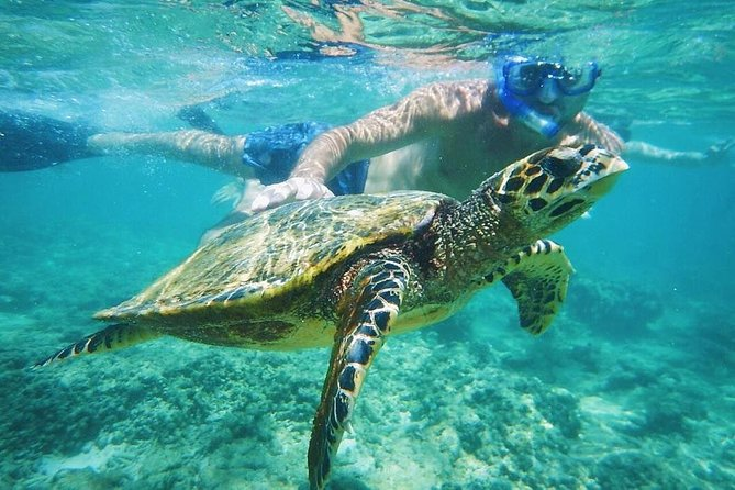 Day Trip Explore Gili Island And Snorkeling From Bali (Private), Seminyak, INDONESIA