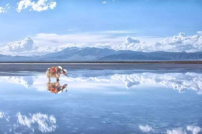 Enjoy acomfortable private vehicle operated by a courteous friendly driver from your Xiningcity hotel to Qinghai Lake andChaka Salt Lake. You will have the maximum freedom to enjoy the sceneries along the way and visit the attractions at your own pace. The transfer service is for 10-12 hours.