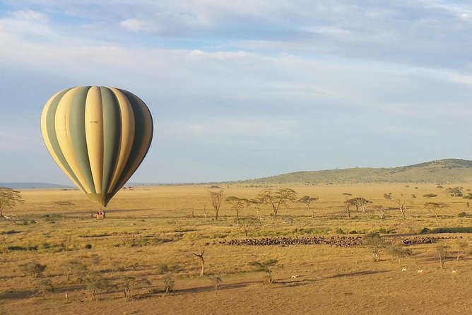 Some things are worth getting up early for and this is certainly one of them. The wonderful experience of a hot-air balloon ride is enhanced many times over by conducting it over the incredible scenery and wildlife of Serengeti National Park. Serengeti Balloon Safaris has 30 years of experience in this field.