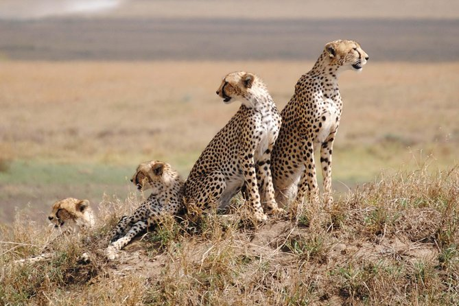 Serengeti National Park – the sanctuary of wildlife in the world. When you set sail to this classic African Safari with more than 2 million wild-beasts, hundred of thousands of Thomson's gazelle, and zebra. This is the gland tour safari where you discover the greatest concentration of plains game than any in Africa.