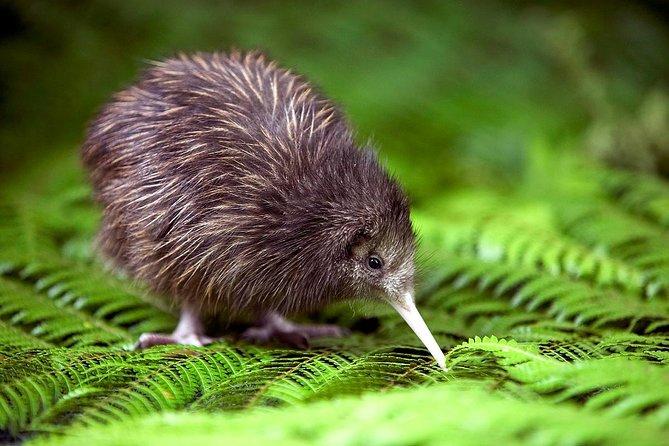 MÁS FOTOS, Akaroa Shore Excursion: Banks Peninsula, Christchurch City Tour and Willowbank Wildlife Reserve