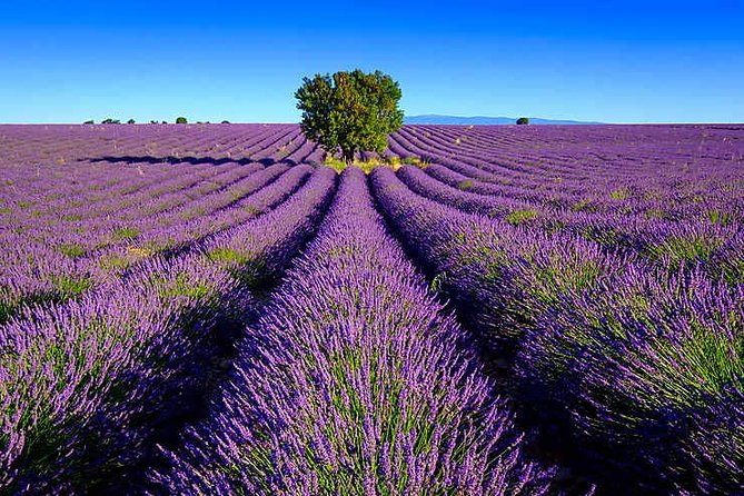 Lavender fields Valensole + Verdon Canyon, Saint-Tropez, FRANCIA