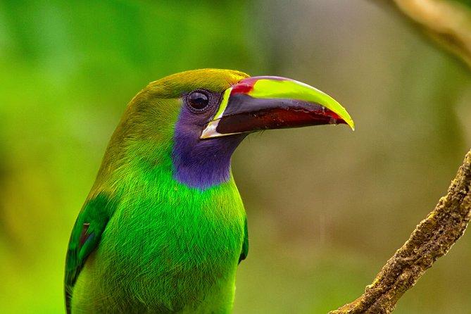 MÁS FOTOS, Specialized Birdwatching Tour