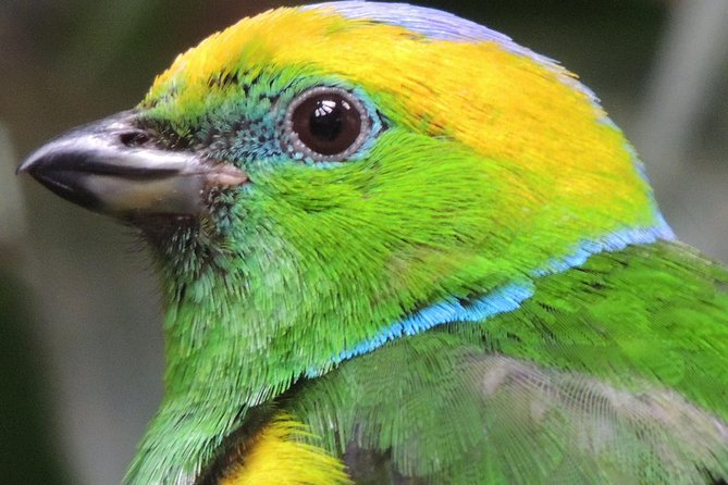 Specialized Birdwatching Tour, Boquete, PANAMÁ
