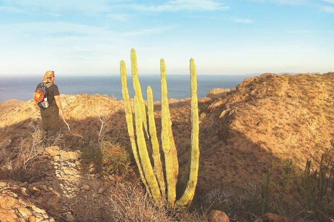 Venture through rugged terrain to discover inspiring nature trails leading into the heart of Tabor, where our eco-oriented tour guide shares the desert's secrets pertaining to flora and fauna that are part of this gorgeous canyon.<br><br>Discover the beauty of Baja California Sur on this Loreto hiking tour!