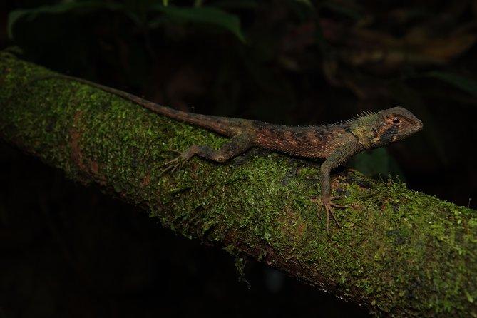 3 Days Exploring the Amazon Rainforest | Tour From Quito to Napo, Ecuador, Quito, ECUADOR