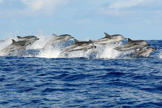 Enjoy Dolphin watching from the boat with a bit of luck you might be able to Swim and play with the Dolphins in the open water. <br>Then, Visit The Jozani's virgin forest where you can watch rare Red Colobus monkey's endemic to Zanzibar.<br>