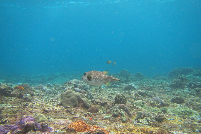 From Bali: Snorkelling with Manta Rays with Island Tour or Mangrove Kayaking, ,