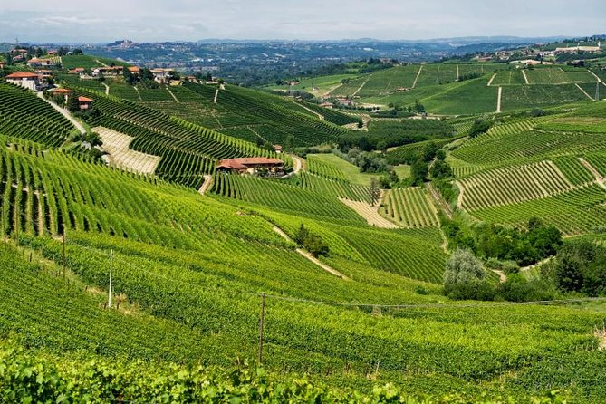 Alba Wine Tours, Private Tasting Experience around Langhe area., Langhe-Roero y Monferrato, ITALIA