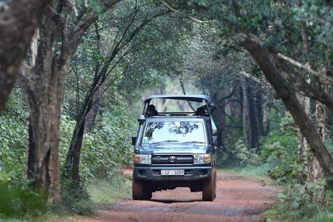 Jeep Safari in Yala National Park, Kandy, SRI LANKA
