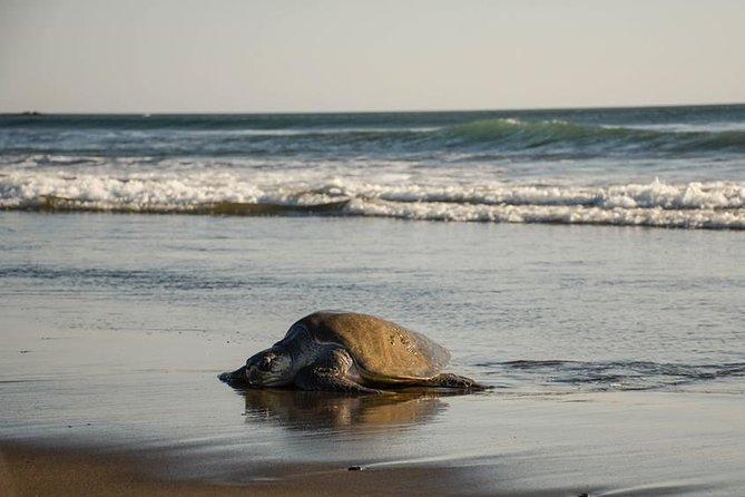 MÁS FOTOS, Turtle Nesting Tour