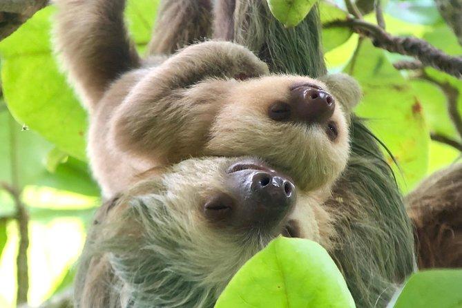 Skip the Line: Manuel Antonio National Park Experience, Quepos, COSTA RICA
