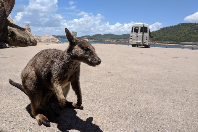 A mature and highly-regarded local guide will provide friendly, entertaining commentary on hundreds of topics covering birds and wildlife, trees, geology, history and folklore on your 5 hour tour of the scenic roads and byways of the beautiful Magnetic Island. Departing Nelly Bay Ferry Terminal you'll visit all the major sights, including one or two secret spots some locals don't even know about. After an hours free time in Horseshoe bay for lunch you will head back to the Ferry terminal in time for the 3pm Ferry departure.