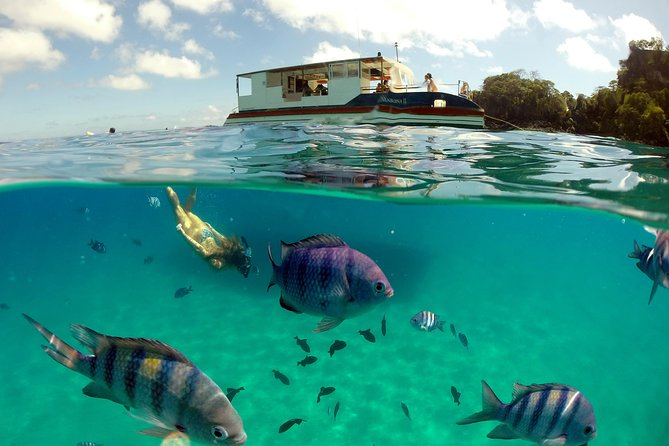 Enjoy breathtaking views from the Fernando de Noronha Archipelago and refreshing stops for swimming on this three hour shared boat tour. You'll have the opportunity to seenaitve wildlife in their natural habitat and swim at one of the most beautiful beaches in entire world.
