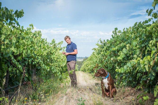 The Ultimate Shottesbrooke Wine & Food Experience, McLaren Vale, AUSTRALIA