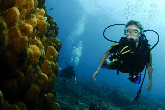 Scuba Review for certified Divers, Ko Phi Phi Don, Thailand