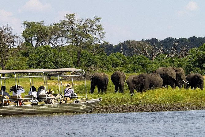 The Chobe Day Trip picks up from 07hours from Livingstone - destination Chobe National Park in Botswana. If you are coming from Livingstone, you will travel to the Kazungula Ferry and then across to Kasane. If you are coming from Victoria Falls, you will be transferred by vehicle to the Kazungula Border which is the border post between Zimbabwe and Botswana - a distance of 80km - here your Botswana Guide will meet you. Start either with a Game drive, lunch then River safari cruise or the other way round.
