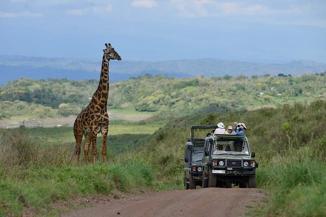 Discover one of Tanzania's wonders of nature the deep, volcanic Ngorongoro Crater Known as the world's largest unbroken caldera, Ngorongoro is home to an incredible array of wildlife such as lion, elephant, wildebeest, and hyena. There's a large hippo pool, where you'll have an opportunity to enjoy a picnic, and a lake where flamingos congregate. Join a knowledgeable guide for this incredible experience, and learn about the region's cultural and natural aspects.
